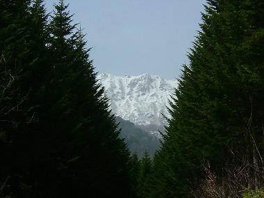 2007042132