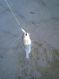 1時間の釣り
