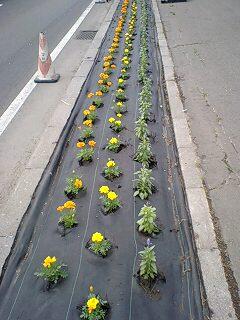 花を植えましょう