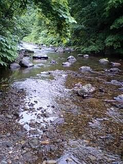ブラウンの棲む川へ
