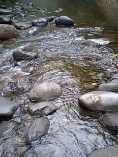 アメマスの川で