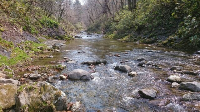 春はイワナの山岳渓流
