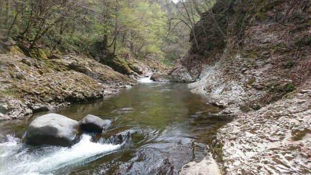 春はイワナ+ニジマスの山岳渓流