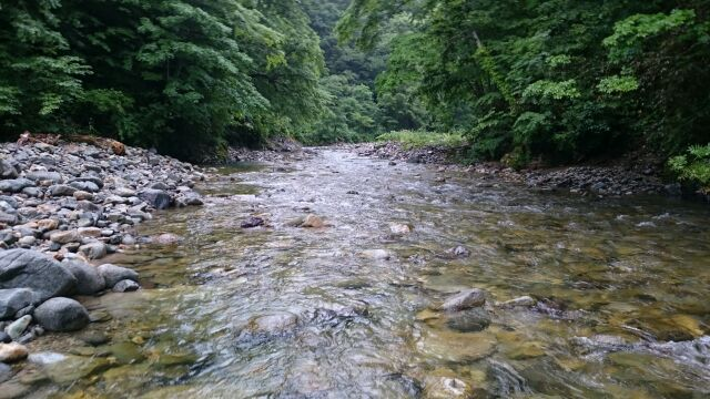 雨の渓流にて