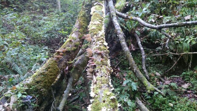 秋の渓流2